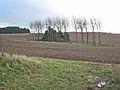 Farmland near Thorpe Bulmer Farm, Hart - geograph.org.uk - 279041.jpg