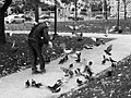 Feeding the Pigeons (585555231).jpg
