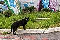 Feral cat in Tuzla.jpg