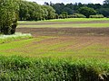 Fields tween Loughborough and Shepshed - geograph.org.uk - 1338473.jpg