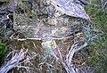 File-Rattlesnake skin;-Jim Peaco;-July 1987 (e3121b4a-46f3-4486-97aa-958ab07e8de3).jpg