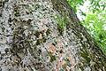Flickr - ggallice - Polistine wasps (2).jpg