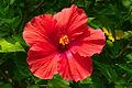Flower 011.jpg
