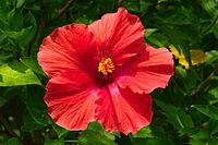 Flower 011