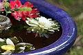 Flower Bath (6225568249).jpg