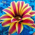 Flower colorful.jpg