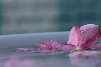 Flowers petals.jpg