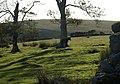 Foal at Swincombe - geograph.org.uk - 1501888.jpg