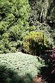 Foliage - Leaning Pine Arboretum - DSC05413.JPG