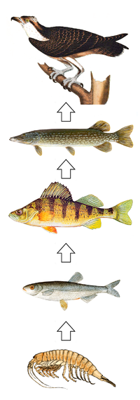 How Do Trophic Cascades Influence Natural Selection