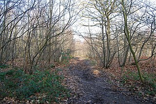 West Blean and Thornden Woods