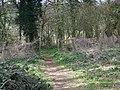Footpath into Quarry Wood - geograph.org.uk - 742337.jpg