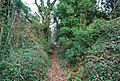 Footpath through Shortwood Common - geograph.org.uk - 1111942.jpg