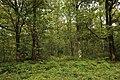 Forêt Départementale de Méridon à Chevreuse le 29 septembre 2017 - 63.jpg