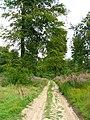 Forêt de Tournehem - panoramio - Jean Marc Gfp (2).jpg