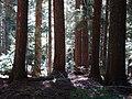 Forest (d08eba7c993145329778fc1a6f73e99c).JPG