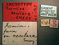 Formica neoclara casent0102157 label 1.jpg