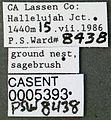 Formica ravida casent0005393 label 1.jpg