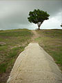 Fort Fisher State Recreation Area Lone Tree.JPG
