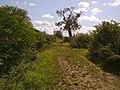 Fosse Way - geograph.org.uk - 2574648.jpg