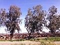 Fresno, CA, USA - panoramio (61).jpg
