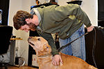 From 'untrainable' to inseparable, K-9 finds new 'pack' through adoption 140228-F-CK351-013.jpg