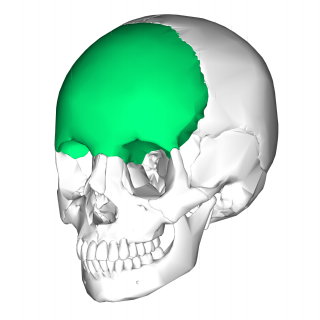 Frontal bone Bone in the human skull