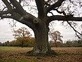 Fulbourn Fen Nature Reserve - geograph.org.uk - 1046552.jpg
