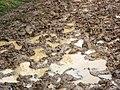 GOC Sandridge to Harpenden 166 Heartwood Forest mud (8249754538).jpg