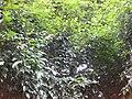 Gardenology.org-IMG 2270 rbgs11jan.jpg