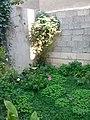 Gardens in Baghdad 37.jpg