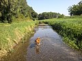 Gerence Creek and a Hungarian Pointer - panoramio.jpg