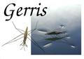 Gerris website.png