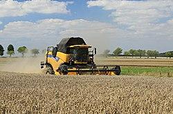 Getreideernte in Sachsen 2H1A7879WI.jpg
