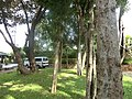 Giritale hotel - panoramio (8).jpg