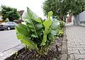 Giurgiu - plant.jpg
