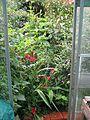 Greenhouse door - Flickr - peganum.jpg
