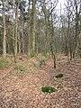 Greppels in het bos (30364927503).jpg