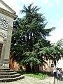 Grosso Albero - panoramio (1).jpg