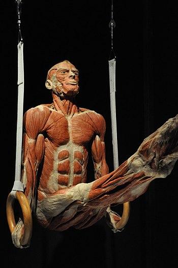 Body Worlds - Wikipedia, la enciclopedia libre