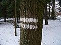Hřebeny, pruhy na stromě.jpg