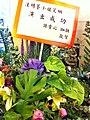 HK North Point 北角 新光戲院 SunBeam Theatre Liza Wang 汪明荃 flowers Ms Susan Tse Dec-2012.JPG