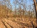 Habitat Tansa WLS by Dr. Raju Kasambe DSCN4979 (4).jpg