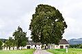Haibach an der Donau - Naturdenkmal nd587 - Sommerlinde (Tilia platyphyllos) - Linde beim Lindnerhof II.jpg