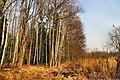 Hajnówka, Poland - panoramio (194).jpg