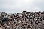Half Moon Island, Antarctica. (24309907704).jpg