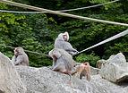 Hamadríade (Papio hamadryas), Tierpark Hellabrunn, Múnich, Alemania, 2012-06-17, DD 15.JPG