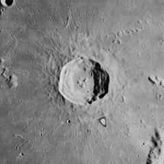 Harpalus crater 4158 h3.jpg