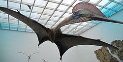 Hatzegopteryx - Wikipedia, the free encyclopedia