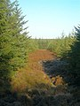 Heathery Firebreak In Sclenteuch Forest - geograph.org.uk - 618918.jpg